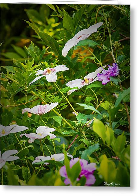 Althea Greeting Cards - Carolyns Flower Garden Greeting Card by Barry Jones