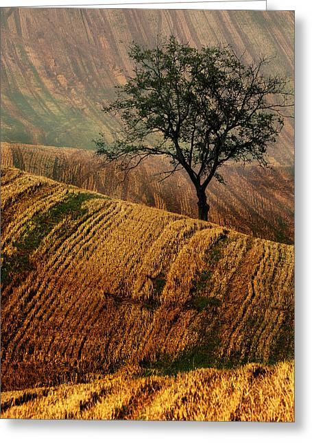 Carpet Fields Of Moravia Greeting Card by Jaroslaw Blaminsky