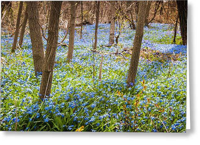 Blooms Greeting Cards - Carpet of blue flowers in spring forest Greeting Card by Elena Elisseeva