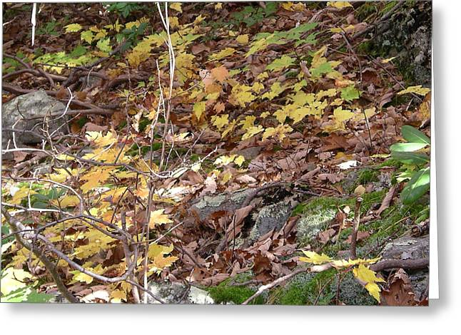 Forest Floor Paintings Greeting Cards - Carpet of Gold Greeting Card by Joyce Blank