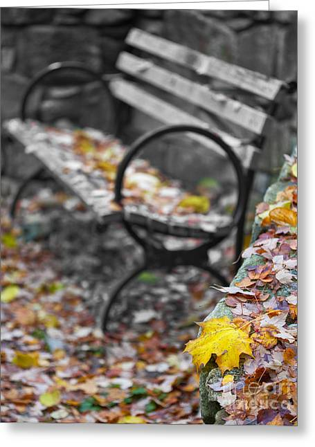 Crossover Greeting Cards - Carpet of Leaves Greeting Card by Don Hall