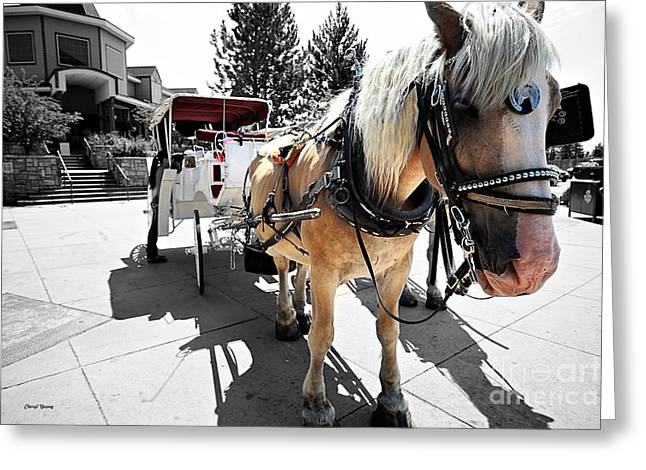 Sight See Greeting Cards - Carriage Horse Greeting Card by Cheryl Young