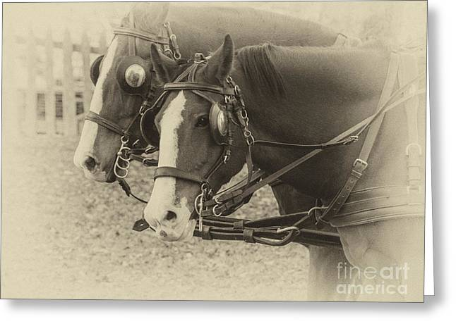 Blinders Greeting Cards - Carriage Horses I Greeting Card by Terry Rowe