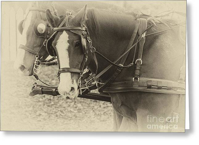 Blinders Greeting Cards - Carriage Horses II Greeting Card by Terry Rowe