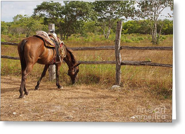 Straps Greeting Cards - Carter Greeting Card by Valerie Morrison