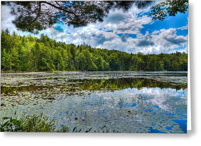 Tranquil Pond Greeting Cards - Cary Lake in the Summer Greeting Card by David Patterson