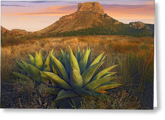 Casa Grande Greeting Cards - Casa Grande Butte With Agaves Greeting Card by Tim Fitzharris
