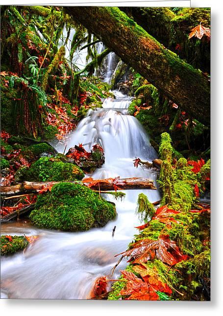 Randy Moss Photographs Greeting Cards - Cascade Creek Greeting Card by Randy Giesbrecht