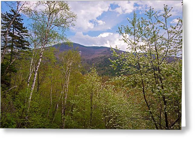 Adirondack Park Greeting Cards - Cascade Mountain Viewed Through Spring Greeting Card by Panoramic Images