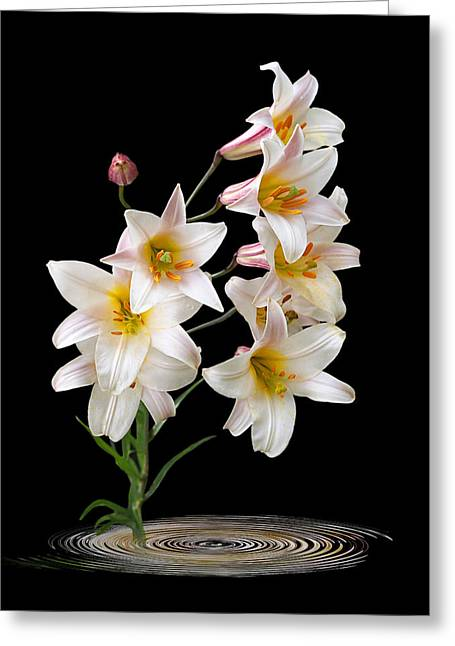 Garden Petal Image Greeting Cards - Cascade of Lilies on Black Greeting Card by Gill Billington