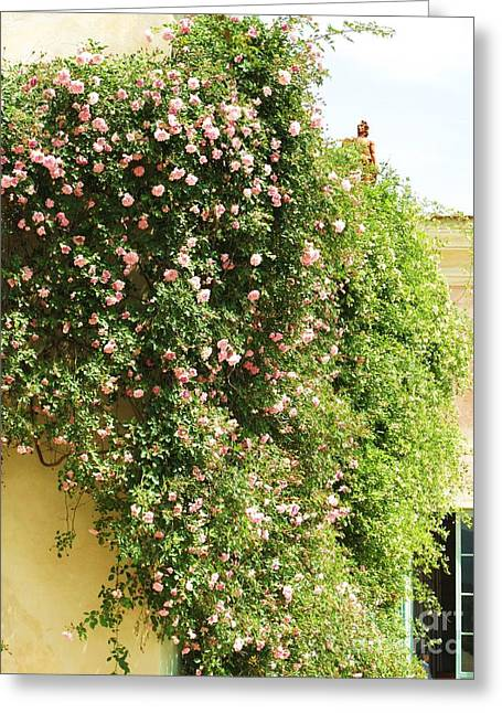 Boboli Greeting Cards - Cascade of Pink Roses Greeting Card by Cimorene Photography