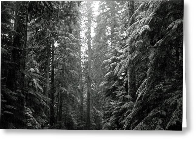 Evergreen With Snow Greeting Cards - Cascade Snow Greeting Card by Loren McNamara