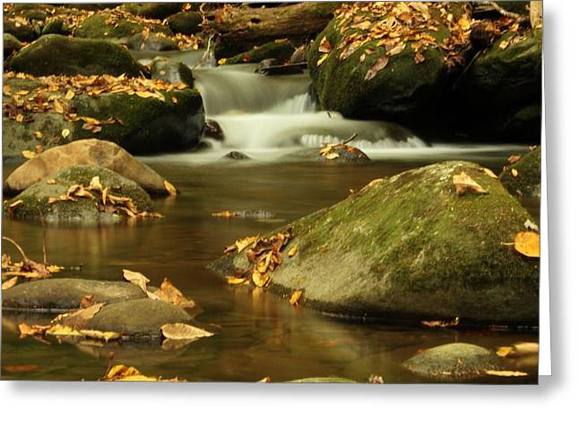 Tennesee Greeting Cards - Cascades In The Smokies Greeting Card by Dan Sproul