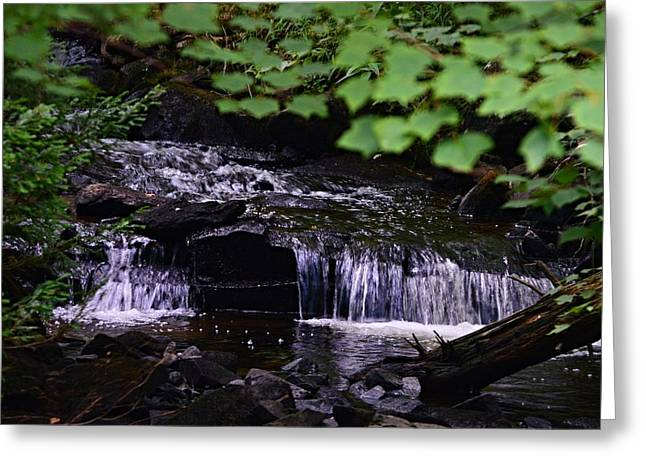 Babbling Greeting Cards - Cascading Brook Greeting Card by Sharon L Stacy