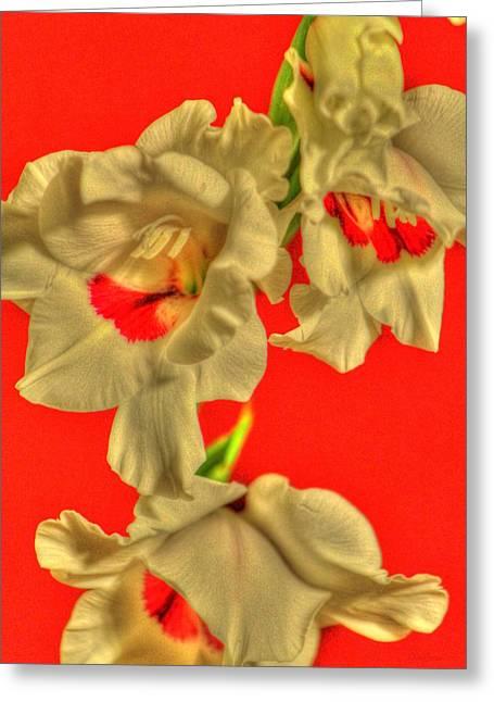 Gladiolas Greeting Cards - Cascading Gladiolas Greeting Card by Deborah  Crew-Johnson