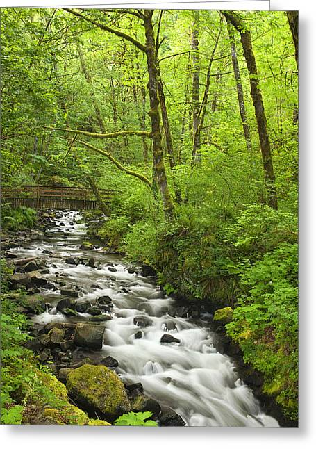 Pacific Northwest Greeting Cards - Cascading Stream in the Woods Greeting Card by Andrew Soundarajan