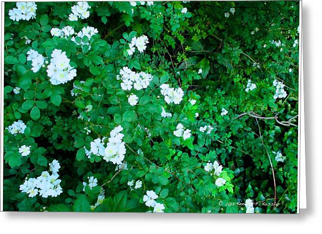 Multiflora Greeting Cards - Cascading White in Wildwood Greeting Card by Kendall Kessler