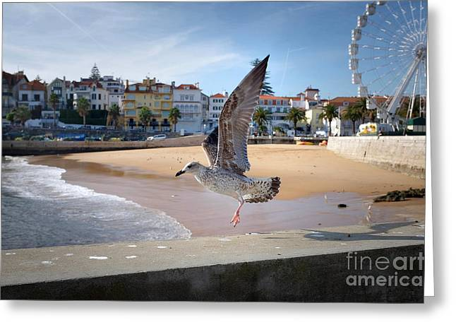 Seagul Greeting Cards - Cascais Seagulls Greeting Card by Carlos Caetano