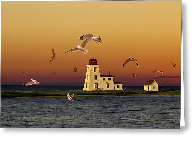 Flying Gulls Greeting Cards - Cascumpec Lighthouse on Prince Edward Island Greeting Card by Randall Nyhof