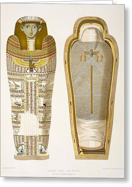 Mummies Greeting Cards - Case And Mummy In Its Cerements Greeting Card by American School