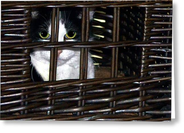 White Frame House Digital Greeting Cards - Casey in Her Cat Condo Greeting Card by Dale   Ford