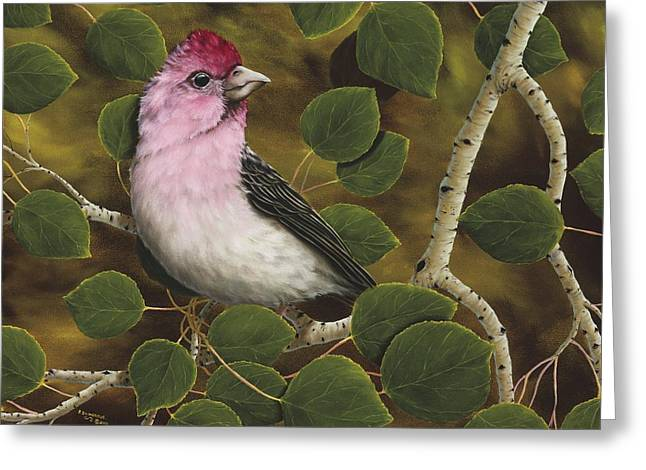 Finch Greeting Cards - Cassins Finch Greeting Card by Rick Bainbridge