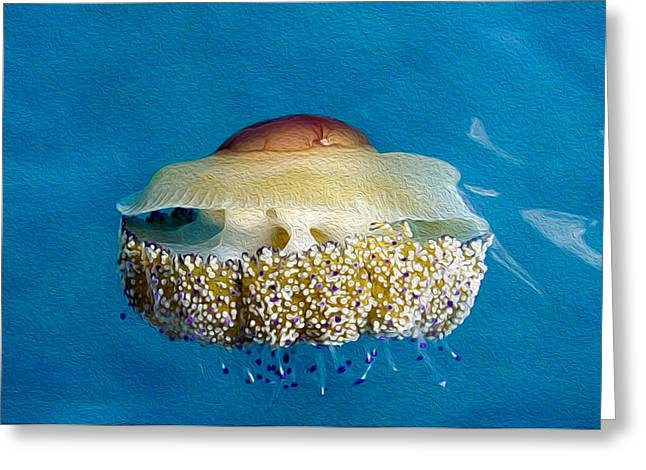 Jelly Fish Art Photographs Greeting Cards - Cassiopia Jelly fish Greeting Card by Roy Pedersen