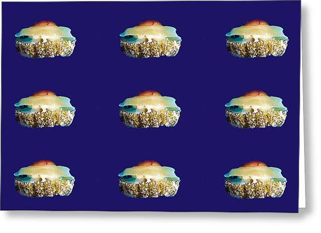 Jelly Fish Art Photographs Greeting Cards - Cassiopia Mosaic Greeting Card by Roy Pedersen