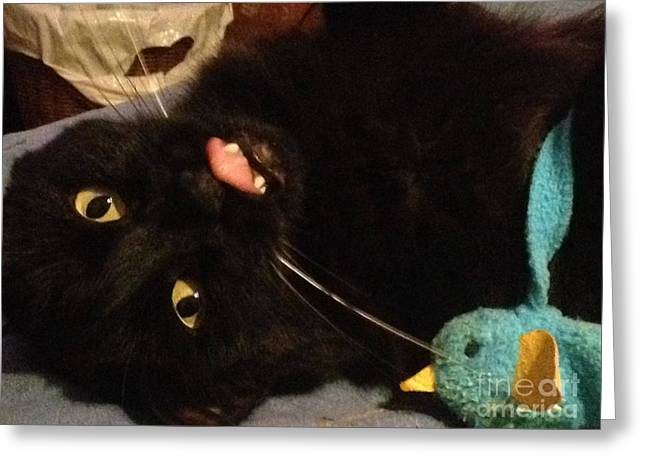 Cute Cat Pyrography Greeting Cards - Cassius loves her birds Greeting Card by Sherri Durrell