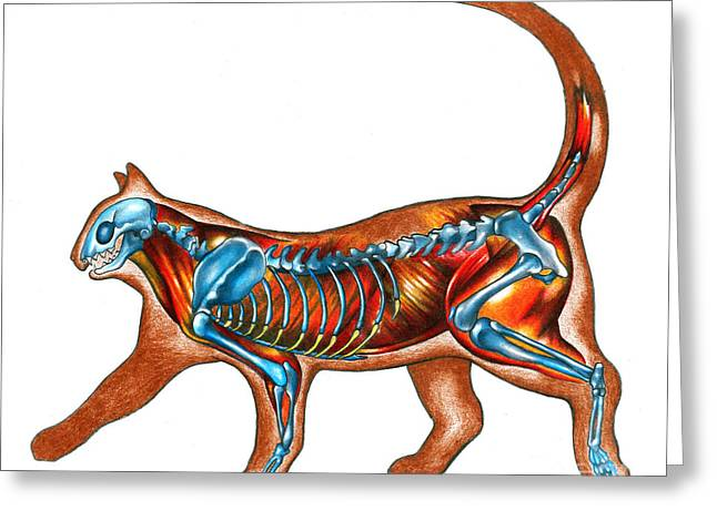 House Pet Greeting Cards - Cat Anatomy Greeting Card by Gwen Shockey