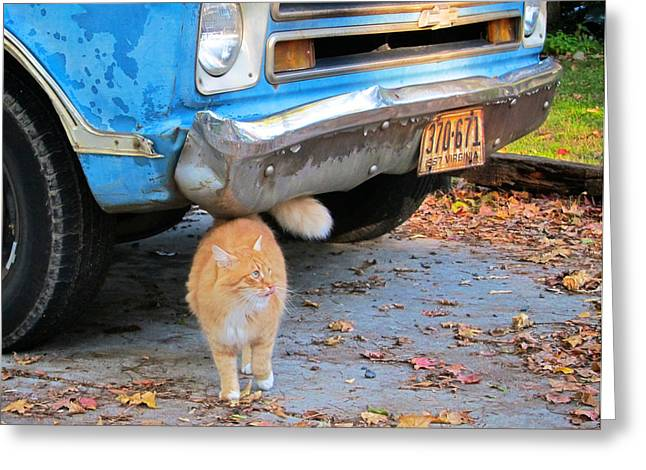 Chevrolet Pickup Truck Greeting Cards - Cat and 1967 Chevy Greeting Card by Mary Lee Dereske