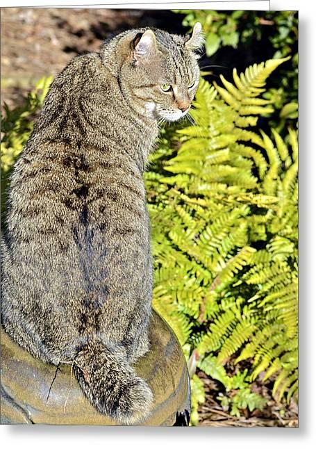 Cat And Ferns Greeting Card by Susan Leggett