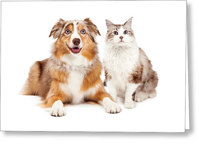 Obedient Greeting Cards - Cat and Happy Dog Together Greeting Card by Susan  Schmitz