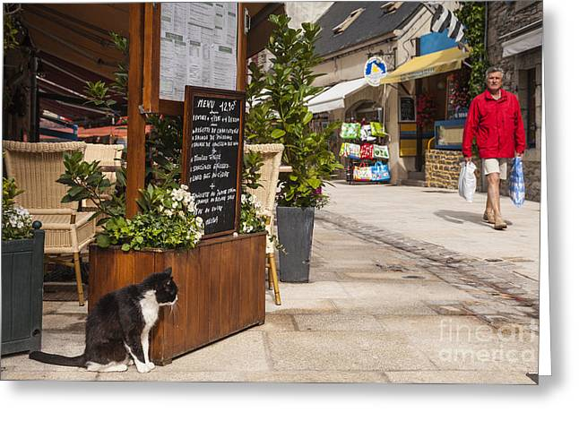 Brittany Greeting Cards - Cat and Restaurant Concarneau Brittany France Greeting Card by Colin and Linda McKie