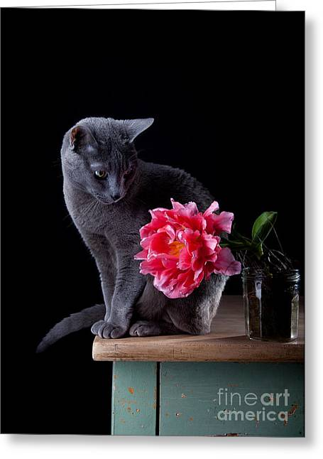 Bred Photographs Greeting Cards - Cat and Tulip Greeting Card by Nailia Schwarz