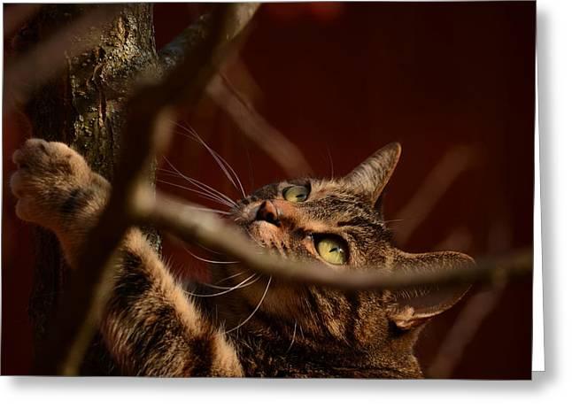 Marianne Kuzimski Greeting Cards - Cat Attack Greeting Card by Marianne Kuzimski