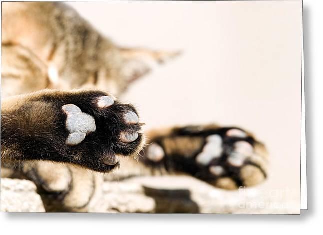 Lazing Greeting Cards - Cat break Greeting Card by Sinisa Botas