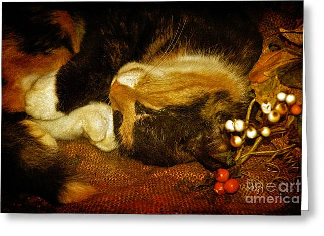 Catnap Greeting Cards - Cat Catnapping Greeting Card by Lois Bryan