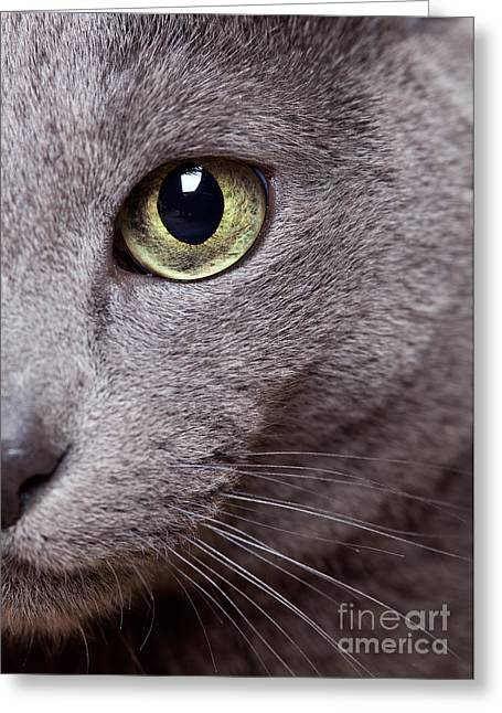 Gray Hair Greeting Cards - Cat Eye Greeting Card by Nailia Schwarz