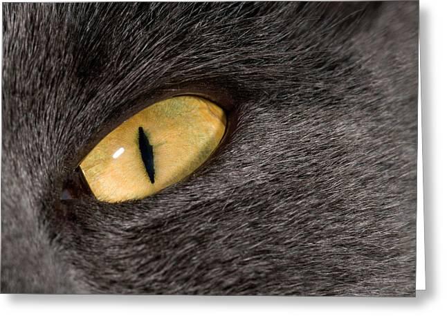 Cat Eye Greeting Card by Nigel Downer