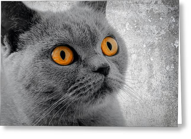 Farm Cat Greeting Cards - Cat Eyes Greeting Card by Daniel Hagerman
