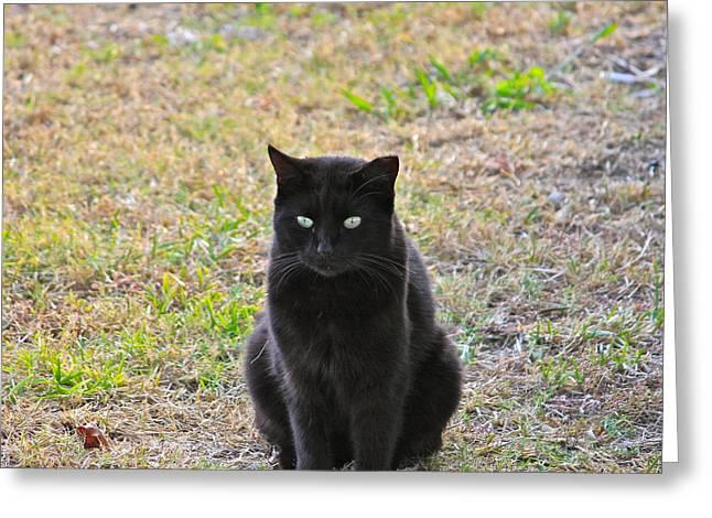 Cedar Key Greeting Cards - Cat Eyes Greeting Card by Lorna Maza