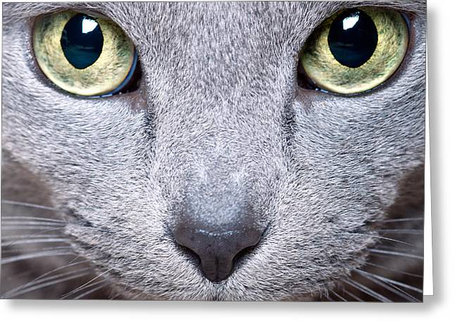 Whiskers Greeting Cards - Cat Eyes Greeting Card by Nailia Schwarz