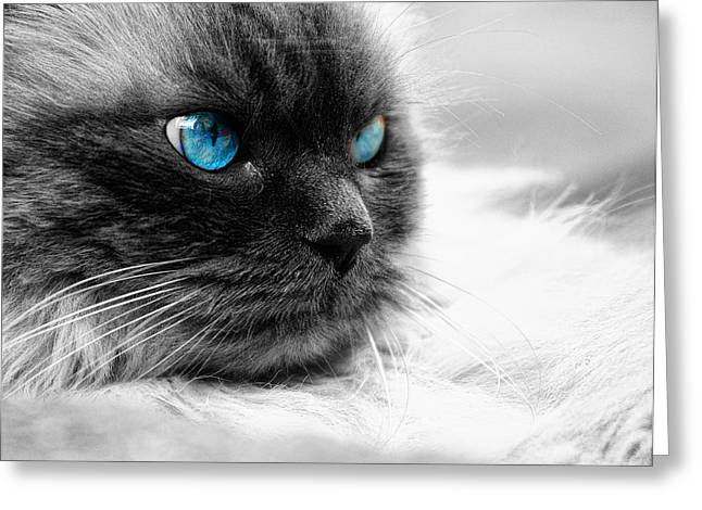 Illuminate Greeting Cards - Cat eyes Greeting Card by Stefano Venturi