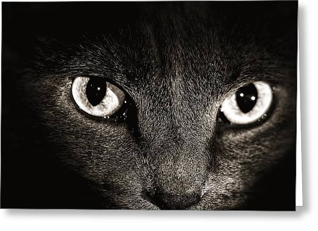 Cat Face Greeting Cards - Cat Eyes Greeting Card by Tim Hayes
