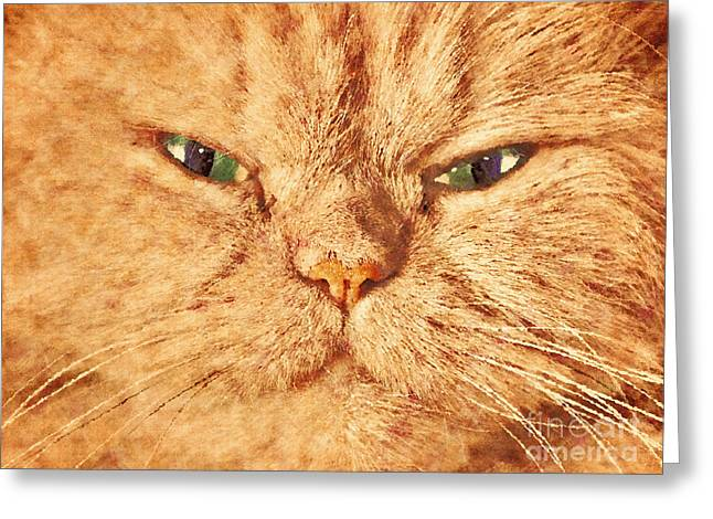 Gray Hair Greeting Cards - Cat face close up portrait. Painted effect Greeting Card by Michal Bednarek
