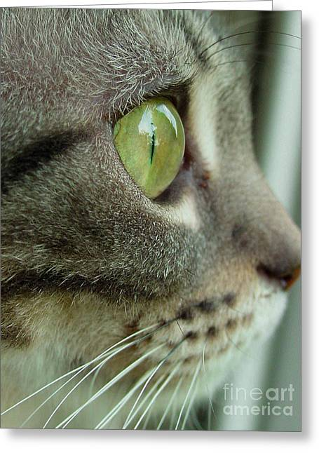 American Shorthair Greeting Cards - Cat Face Profile Greeting Card by Amy Cicconi