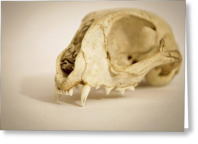 Osteology Greeting Cards - Cat Got Your Tongue Greeting Card by Heather Applegate