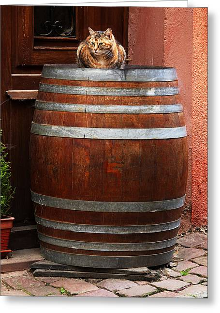 Wine Scene Greeting Cards - Cat Guarding a Wine Barrel in Alsace Greeting Card by Greg Matchick