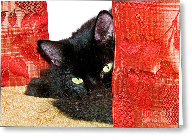 Angora Greeting Cards - Cat Hiding Behind Drapes Greeting Card by Millard H. Sharp